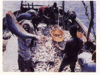 Los océanos pierden el 90% de sus peces en un siglo