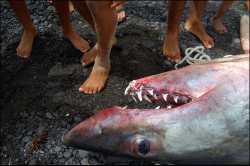 Tiburones en Fuerteventura