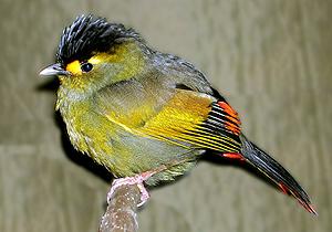 Descubren una nueva especie de pájaro en el noreste de la India