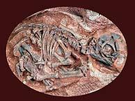 Unos fósiles de embrión de dinosaurio de 190 millones