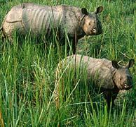 Sólo quedan 887 hipopótamos en la mayor reserva del Congo