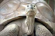 El animal más viejo del mundo