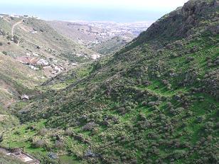 Gran Canaria se viste de verde