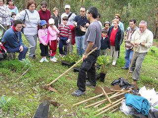 Turcón plantó 120 especies de laurisilva en Moya