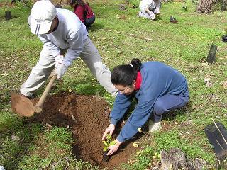 Plantación de árboles en Moya