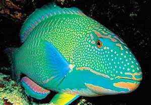 WWF/Adena descubre en Filipinas un nuevo arrecife de coral con especies de peces desconocidas