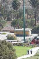 Un hongo acaba con 15 palmeras en Telde y obliga al Ayuntamiento a inspeccionar todas sus zonas verdes