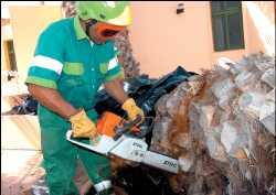 El Cabildo crea una comisión de seguimiento con los ecologistas para el picudo rojo