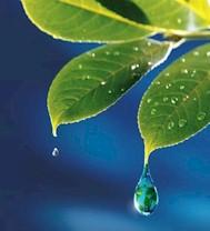 El Archipiélago canario cuenta con 262 especies de flora amenazadas