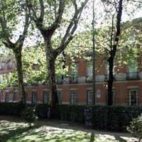 La baronesa Thyssen quiere salvar los árboles frente a su Museo como sea