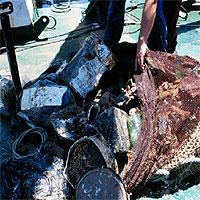 Los científicos piden que se estudie el efecto de basuras y plásticos en el mar
