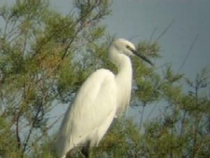 Visita ornitológica: conoce las aves de Canarias