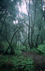 Recuerdo de la perdida Selva de Doramas
