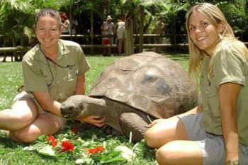 La tortuga Harriet, el animal más viejo del mundo, muere a los 176 años