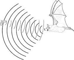 Advierten de un desastre biológico en Cuba por la continua desaparición de murciélagos
