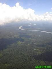 Greenpeace celebra el acuerdo de los productores de soja para detener la deforestación en la Amazonia
