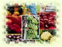 Andalucía impulsa a España a la vanguardia de la agricultura ecológica
