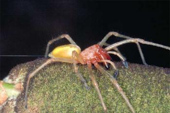 Una araña desata el pánico en Austria