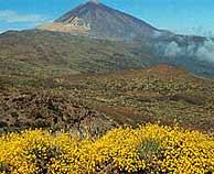 Un grupo de investigadores medirá los gases del Teide