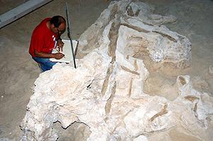 Descubren un árbol cortado por hombres neandertales