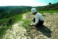 La sequía siembra la desolación en China