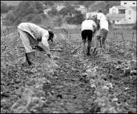 El sector agrario en las Islas está atravesando la mayor crisis de su historia