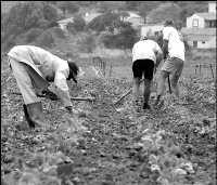 Los agricultores acusan a Emalsa de recortar el abasto de agua