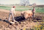 ¿Cómo evitar la despoblación en el medio rural?