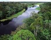 A la Amazonía se le acaba el tiempo