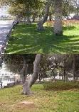 El Partido Verde Canario denuncia el abandono de los árboles del parque de San Telmo