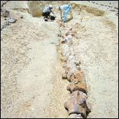 Ballenas con patas en Egipto