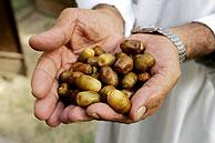 Globalizarse o morir : una solución para los pequeños productores