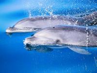 Delfines grancanarios