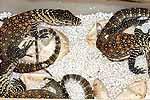 Nacen 17 ejemplares de dragones de Komodo en Gran Canaria