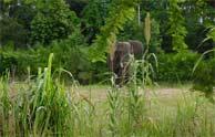 Laos deja poco a poco de ser el reino del 'Millón de Elefantes'