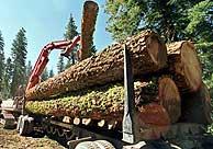 Organizaciones sociales piden a las Administraciones un consumo responsable de madera y papel