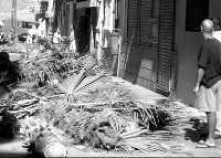 Decenas de vecinos ´toman´ la playa de Las Canteras para protestar contra la tala de ocho palmeras