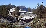 El Cabildo grancanario pretende talar 40 pinos canarios
