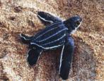 Tortugas depredadoras en Madrid